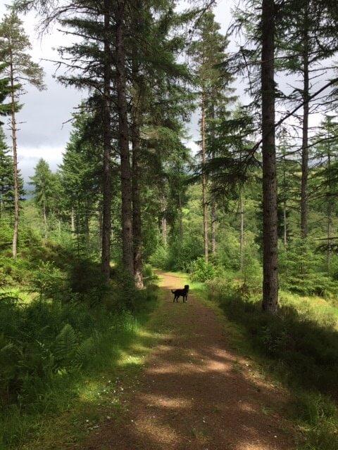 image of Woodland paths